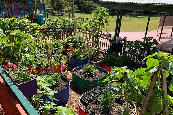 Life Education Queensland Healthy Harold Jubilee Cc Blog